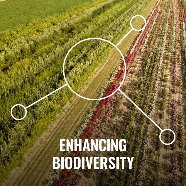 enhancing biodiversity