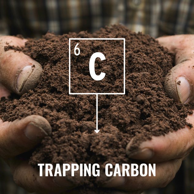 trapping carbon