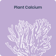 New Chapter's Plant Calcium ingredient, Red Marine Algae (Lithothamnion), for bone support