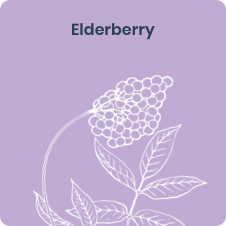 Elderberry, a natural superfood ingredient in New Chapter immune support supplements