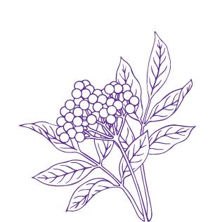 Elderberry tile