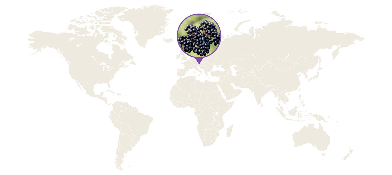 elderberry farmers map