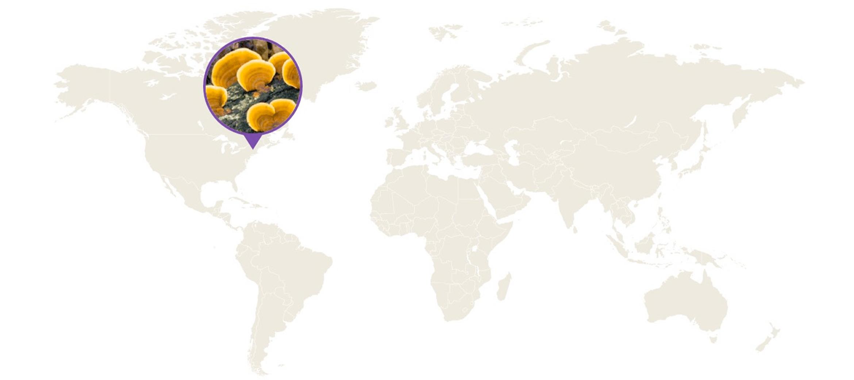 reishi farmers map