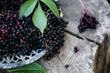 History of Black Elderberry for Immune Support