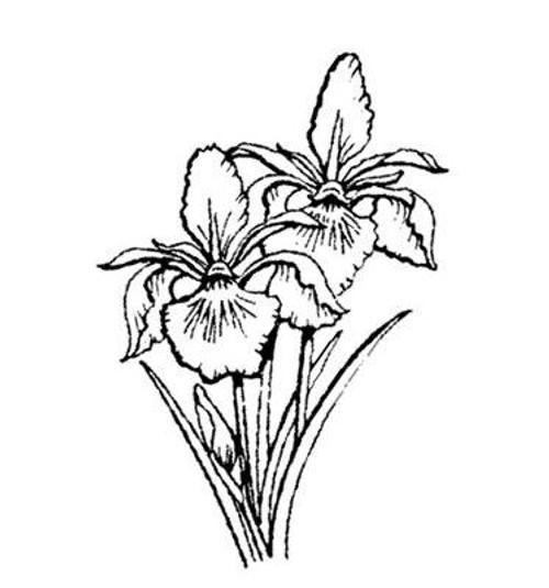 Emerald Creek Iris - Cling Mount