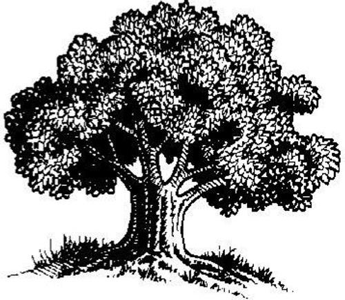 Emerald Creek Oak Tree - Cling Mount