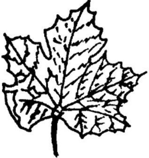 Emerald Creek Maple Leaf - Cling Mount