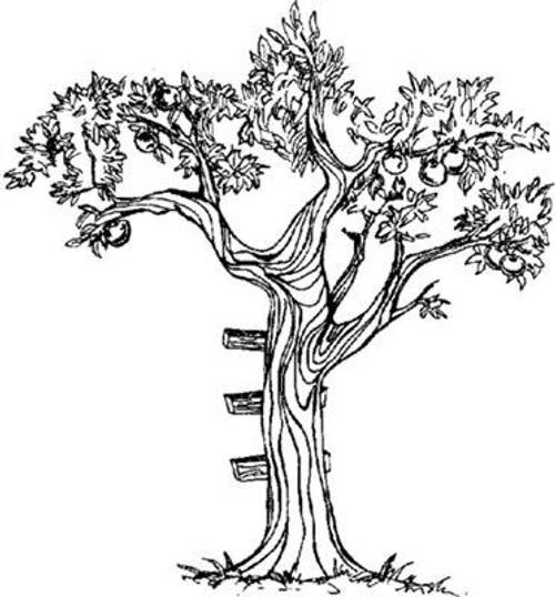 Emerald Creek Apple Tree - Cling Mount