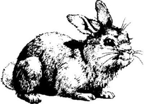 Emerald Creek Bunny Rabbit - Cling Mount