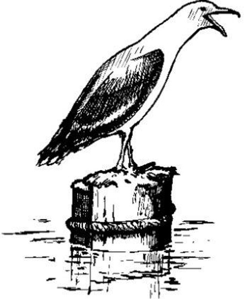 Emerald Creek Seagull - Cling Mount