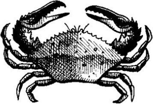 Emerald Creek Crab - Cling Mount