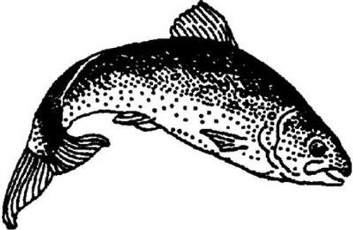 Emerald Creek Salmon