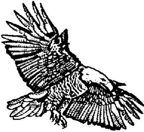 Emerald Creek Eagle
