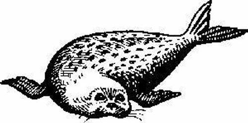 Emerald Creek Seal