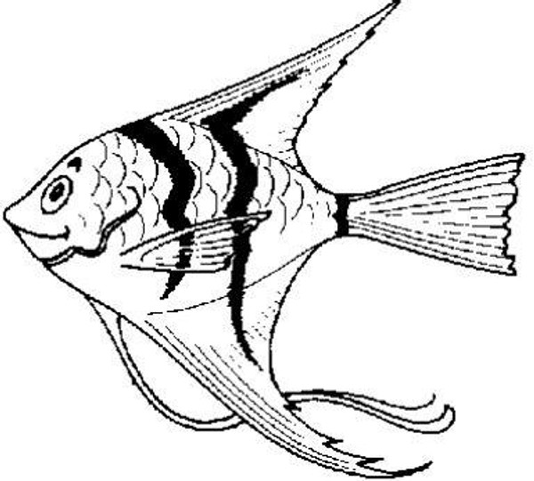 Emerald Creek Angel Fish - Cling Mount