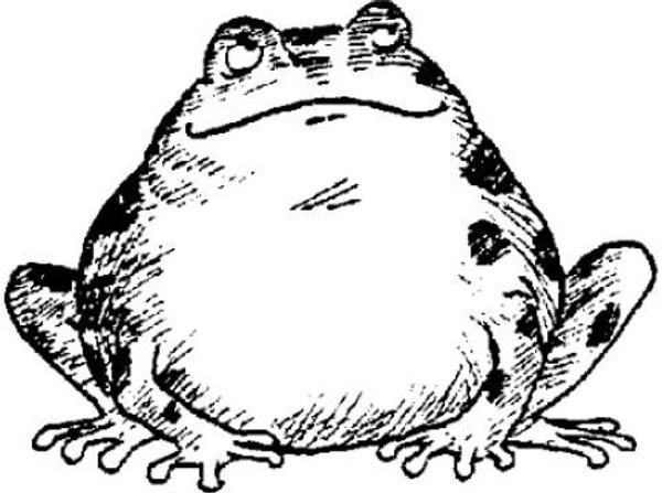 Emerald Creek Happy Frog - Cling Mount