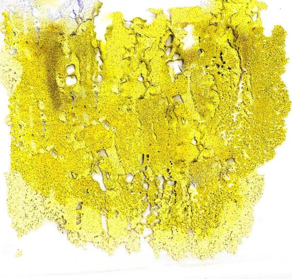 Emerald Creek Hype Veneer - Lemon Burl