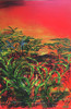 """""""Ahu ʻAilāʻau"""" is from lava field series paintings depicts the flow of lava as it destroys the rain forest paradise of Puna along the beaches of Hawaii."""
