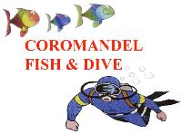Coromandel Fish & Dive