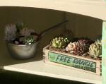 1:12 succulents crate miniature kit
