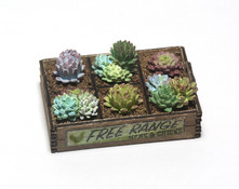 """1"""" one inch scale hens and chicks succulents in a crate"""
