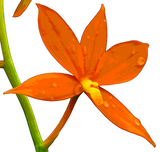 Orchid Request