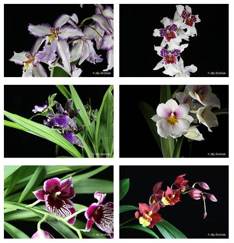 6-blooming.jpg