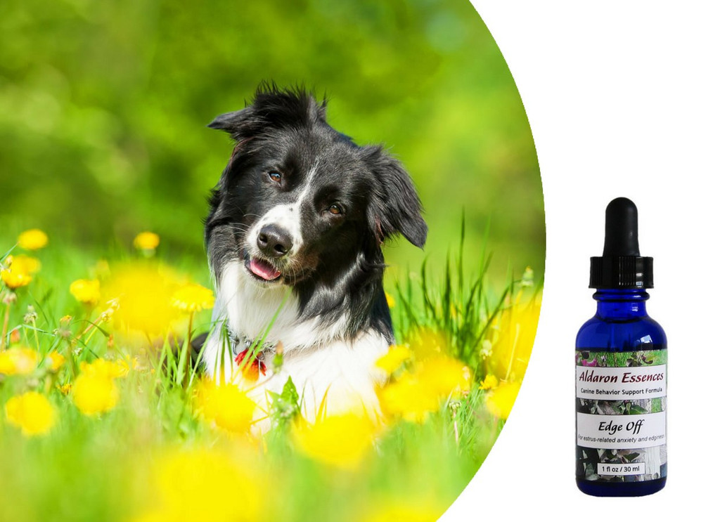 Flower essences for moody, grumpy, anxious, hormonal female dogs