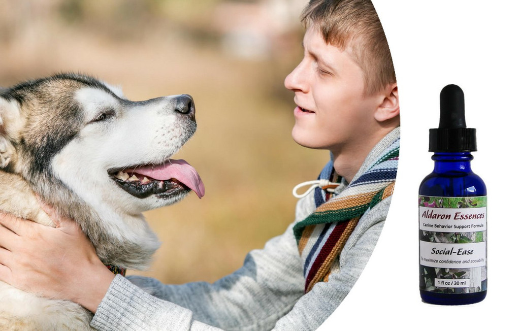 Aldaron Essences Social-Ease for dogs. Build confidence and sociability with our all-natural flower remedies.
