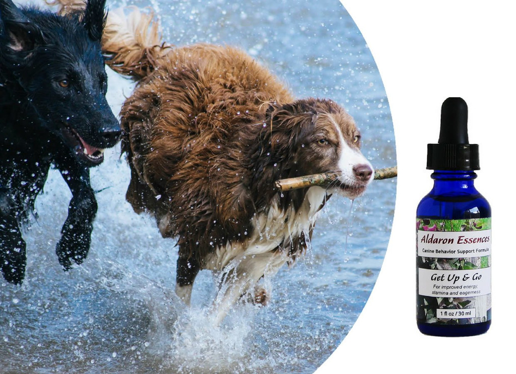 Flower essences for dogs: improve energy, stamina, and eagerness.