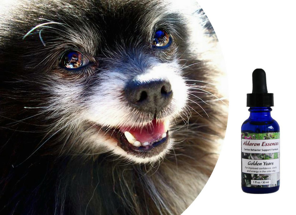 Flower essences for senior older dogs: boost attitude, energy and positive outlook