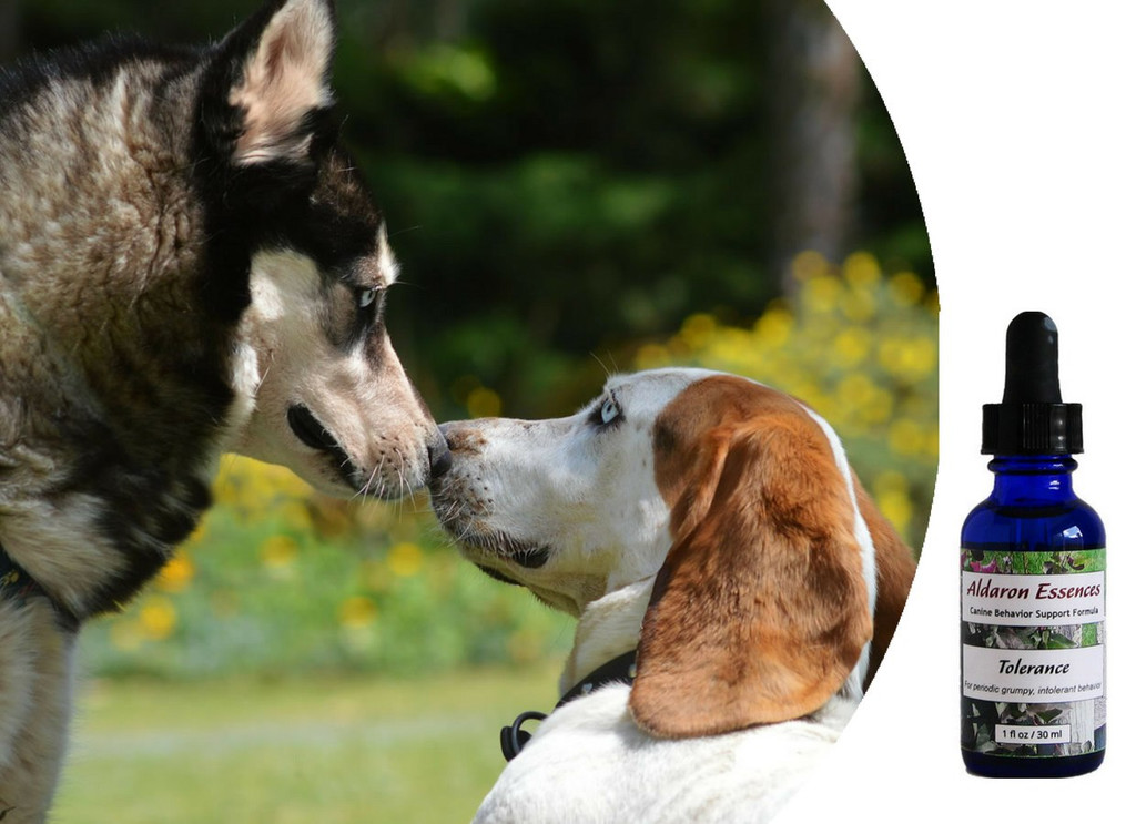 Flower essences for dogs with periodic  grumpy, grouchy, testy behavior.