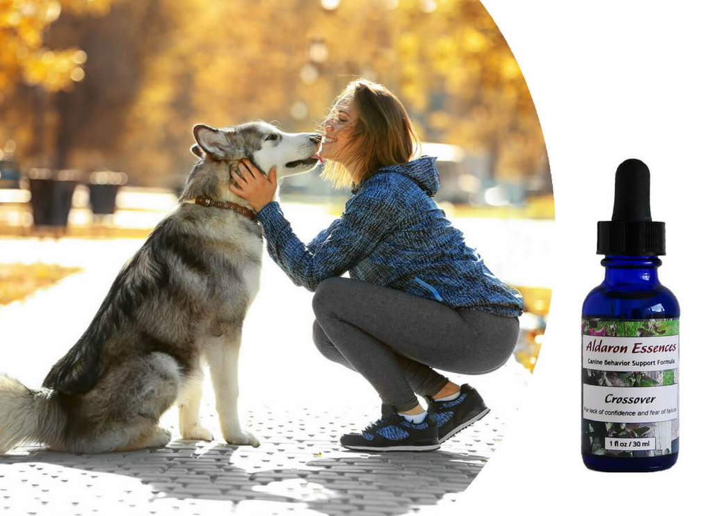 Flower essences for dogs: Crossover remedies lack of confidence and fear of failure.