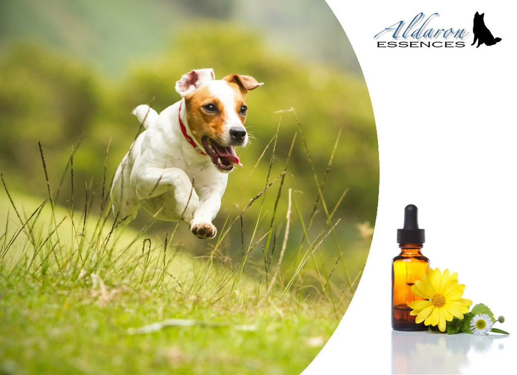 Bach flower essences for dogs, your choice of up to 7 essences per bottle. Relieve stress, anxiety, fears, reactivity.