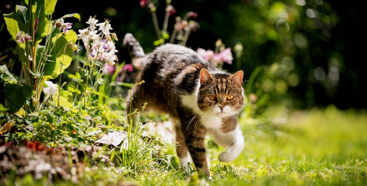 Is Alcohol in Flower Essences Safe for Cats?