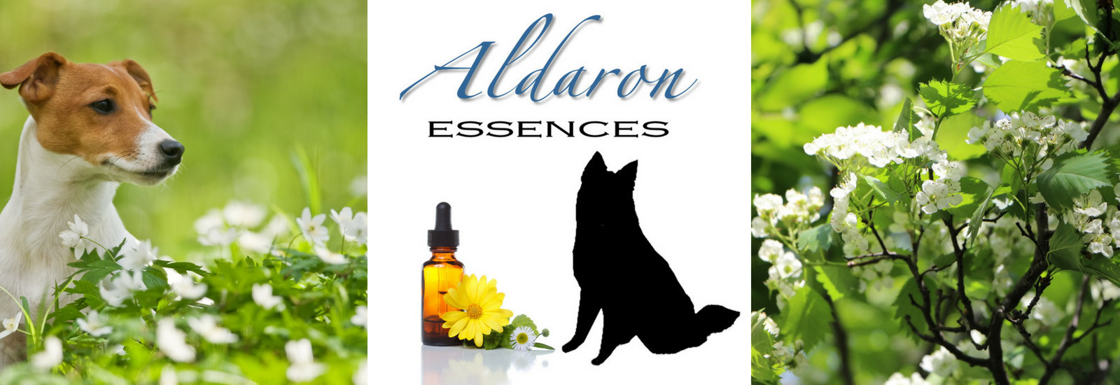 Custom Flower Essence Formulas
