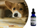 Flower essences for dogs: natural help for anxious, nervous, fearful, timid dogs.