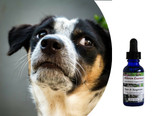Flower essences for dogs: fear aggression, defensiveness, especially when under stress