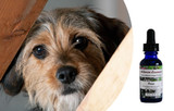 Flower essences for dogs with extreme fear, panic and loss of control