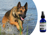 Flower essences for intense, overbearing, controlling dogs.