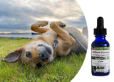 Flower essences for dogs: drug-free help for high strung, restless, wired dogs