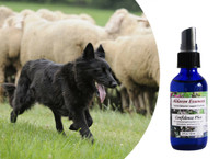 Flower essences for dogs: improved self confidence, self assurance, and resilience