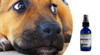 """Flower essences for dogs: fear & anxiety relief for responsible, """"on the job"""" type dogs"""