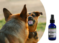 Equilibrium flower essences for dogs - to reduce confrontational behavior driven by fear and stress