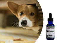 Flower essences for dogs: anxiety, nervous, fearful, timidity