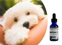 Flower Essences for dogs: Help Over-Attached, Needy, Dependent Dogs