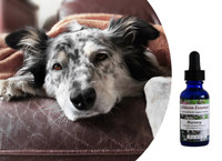 Flower essences for dogs: Aldaron Essences' Recovery blend restores resilience, energy, and hopefulness in dogs recovering from physical illness or emotional trauma.
