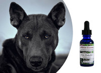 Flower essences for dogs: controlling, possessive, owner-guarding behavior