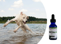 Flower Essences for False Pregnancy and Moodiness in Dogs