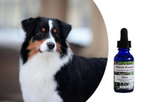 "Flower essences for dogs: bring out your show or performance dog's ""personality plus"""